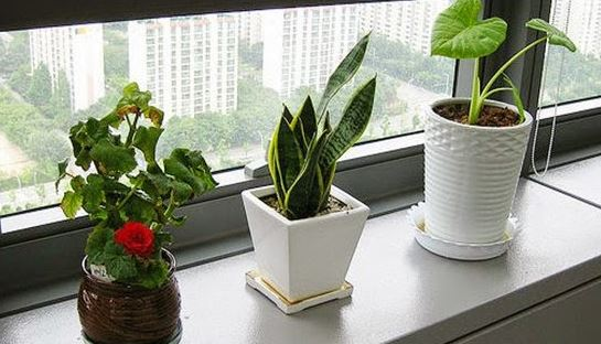 Plants in Office Cubicle