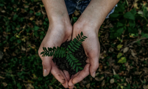 10 Ways Caring for the Environment Saves You Money